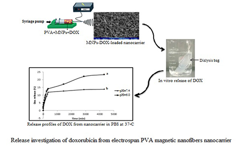 Synthesis and cytotoxicity evaluation of electrospun PVA magnetic nanofibers containing doxorubicin as targeted nanocarrier for drug delivery
