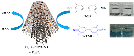 Preparation and characterization of a carbon-based magnetic nanostructure via co-precipitation method: Peroxidase-like activity assay with 3,3ʹ,5,5ʹ-tetramethylbenzidine
