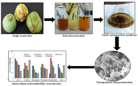 Biofabrication of manganese nanoparticle using aegle marmelos fruit extract and assessment of its biological activities