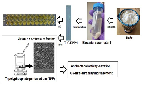 Investigation of chitosan nanoparticles durability in combination with antioxidant-antibacterial fraction extracted from Lactobacillus casei and possible increase of antibacterial activity of the fraction in hybrid nanoparticle